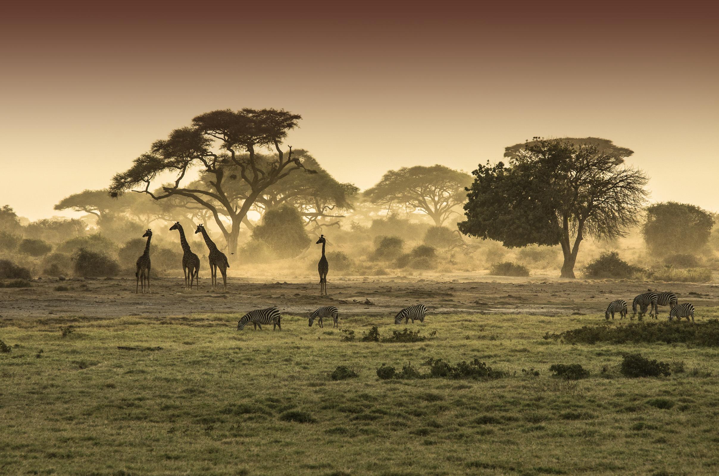 Homepage slider Africa