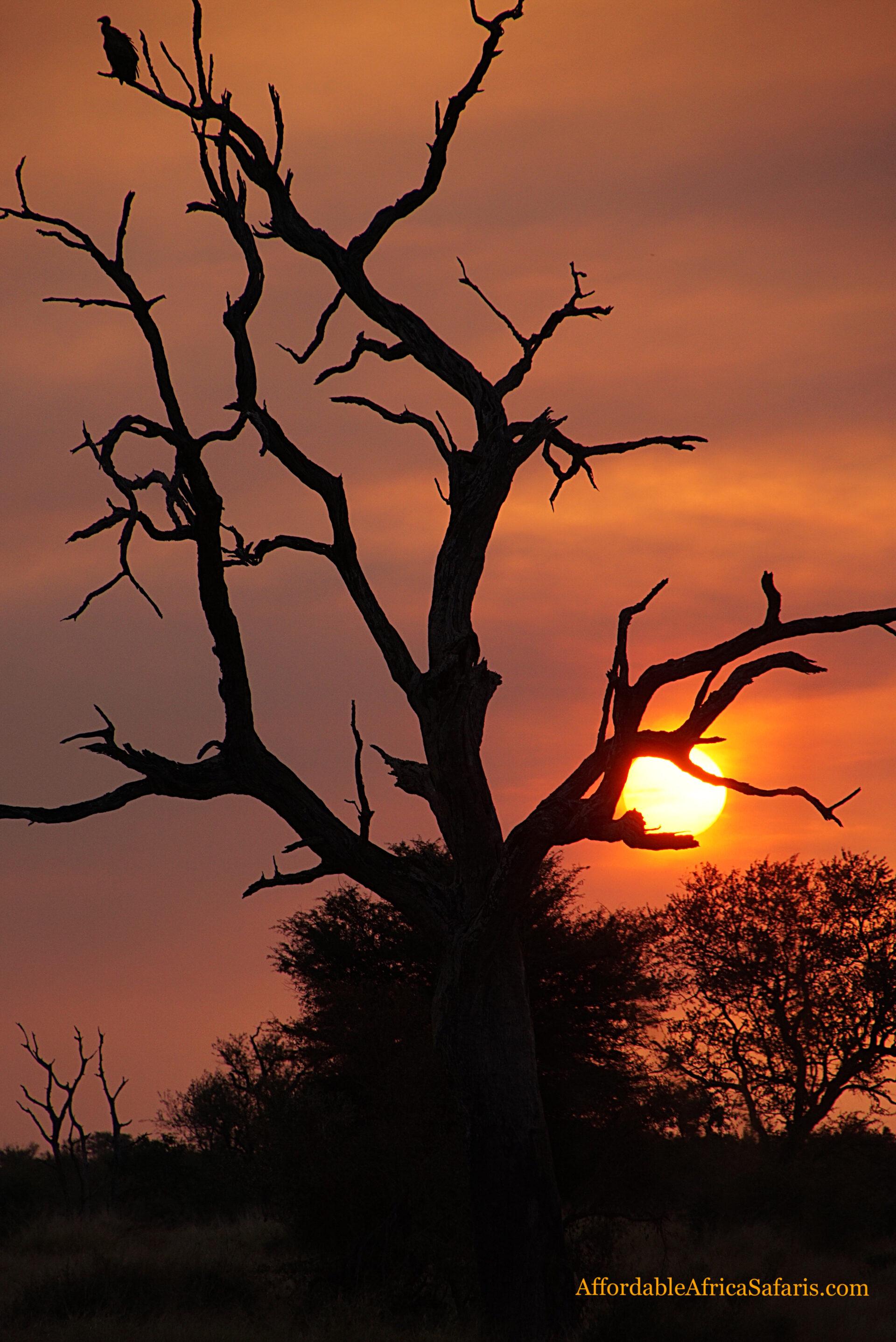 Sun sets on a tree branch