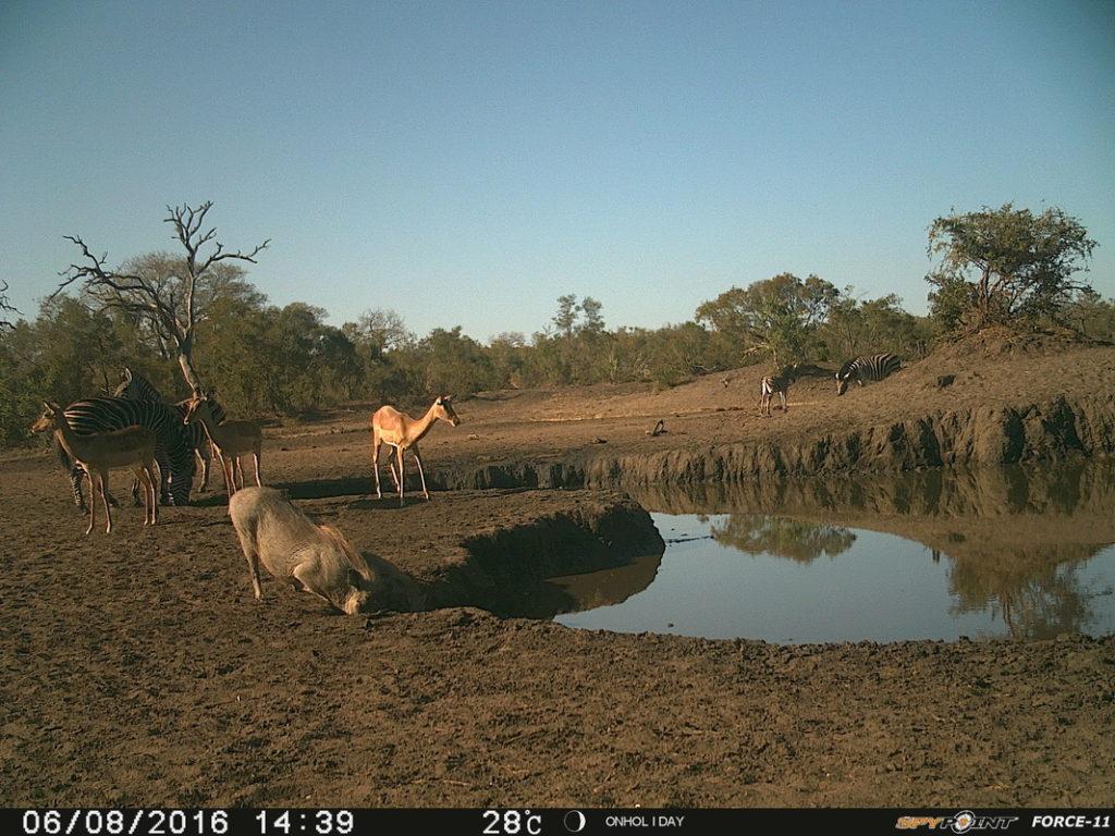 camera several animals