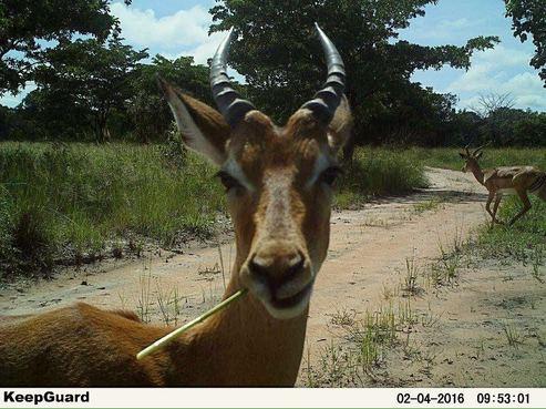 impala camera