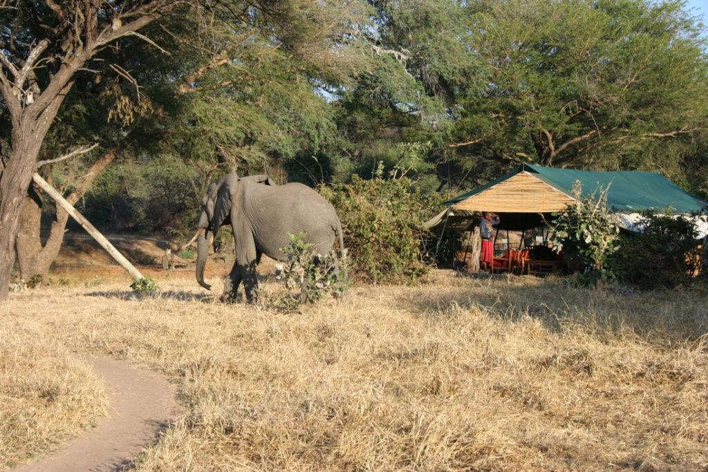 elephant visiting