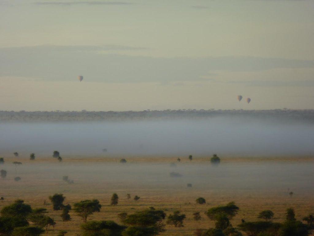 foggy serengeti