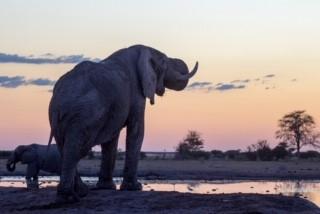 elephant review