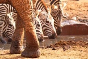 kenia july 2019 elephant feet