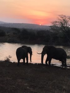south africa august 2019 elephants