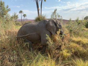 namibia september elephant